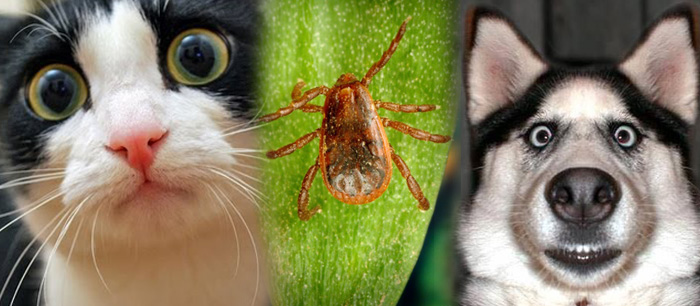 Ick Ticks! </br>Read about what you can do to protect your pet against ticks