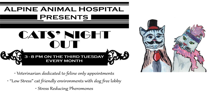 Introducing Cats Night Out!