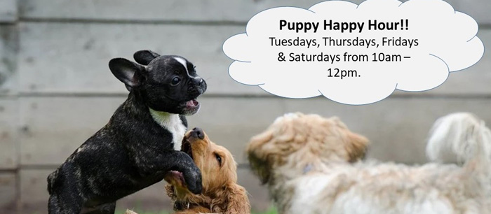 Puppy Happy Hour!