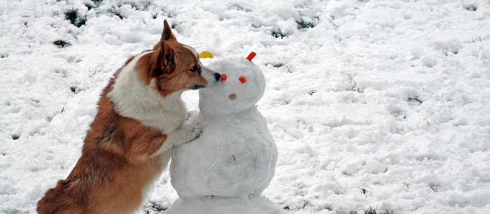 Winter is here! </br>Check out our winter pet care tips